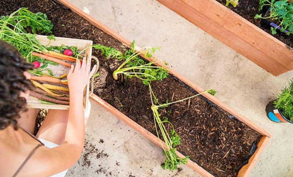 Mejor mesa de cultivo urbano: Aquí tenemos 3 opciones para ti