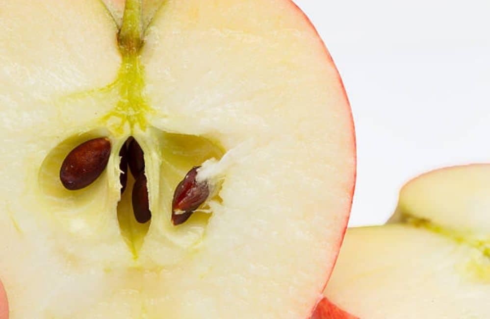 ¿Por qué las semillas de manzana se consideran toxicas?