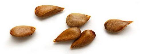 Semillas de mi manzana